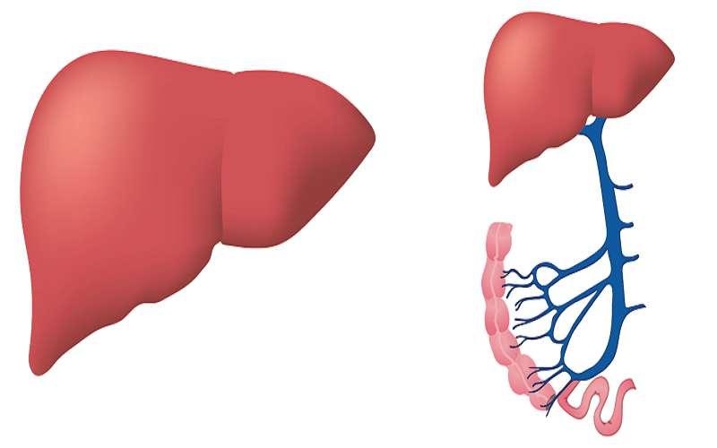 Wirusowe zapalenie wątroby – jak leczymy?